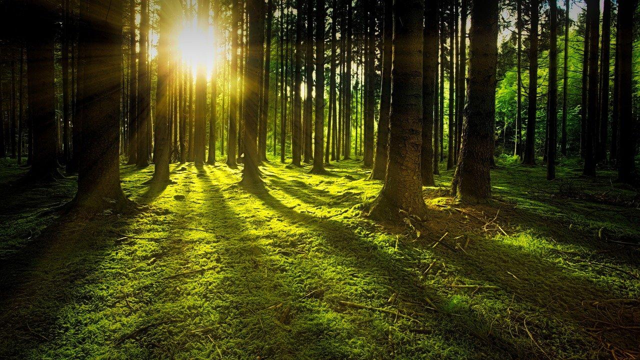 trees, moss, forest-3294681.jpg